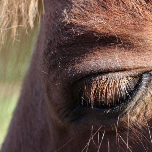 Carin Camp coachen met Paarden (115)