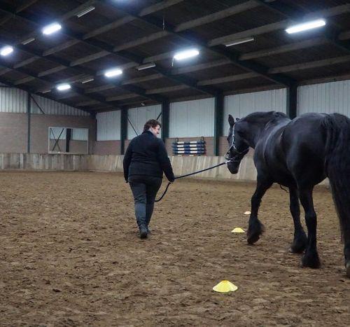 Carin Camp coachen met Paarden (124)