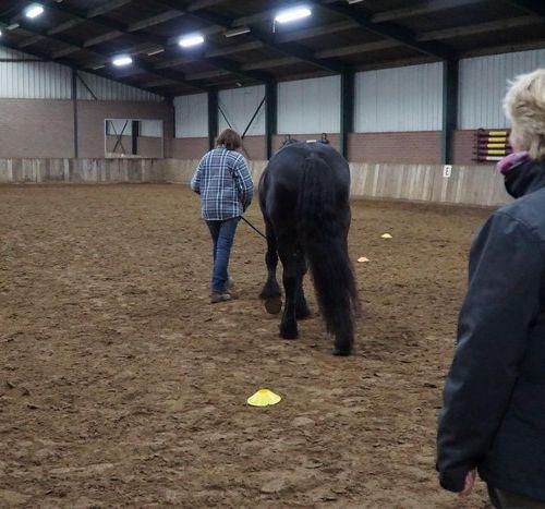 Carin Camp coachen met Paarden (133)