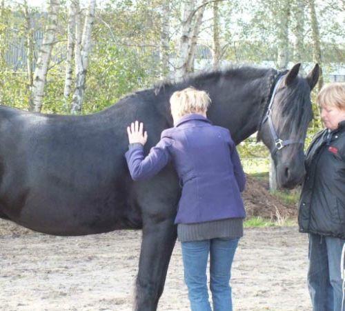 Carin Camp coachen met Paarden (211)
