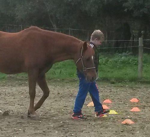 Carin Camp coachen met Paarden (286)