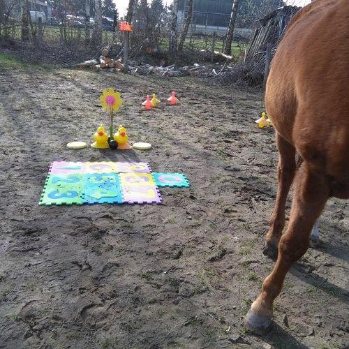 Carin Camp coachen met Paarden (4)