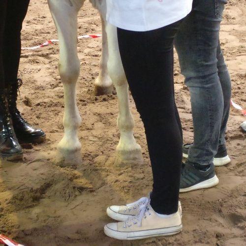 Carin Camp coachen met Paarden (45)
