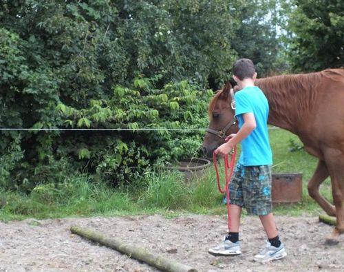 Carin Camp coachen met Paarden (53)