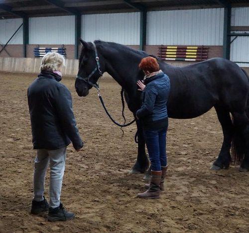 Carin Camp coachen met Paarden (57)